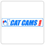 At MS Motorsport we carry Cat Cams products.
